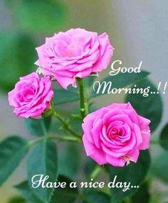 Good Morning God Quotes, Good Morning Images Flowers, Good Morning Beautiful Images, Good Morning Images Hd, Good Morning Picture, Good Morning Messages, Morning Pictures, Good Morning Greeting Cards, Morning Greetings Quotes