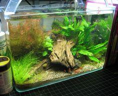 2.5 gallon pico tank by amphirion