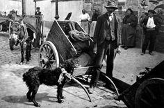 """vieuxmetiers: """"Le marchand de crottes de chiens (pour l'engrais), 1900s. """""""