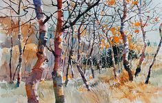 Carl Purcell Autumn Sunlight 2 | Flickr - Photo Sharing!