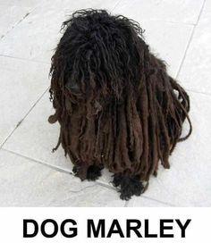 Dog Marley on http://www.drlima.net