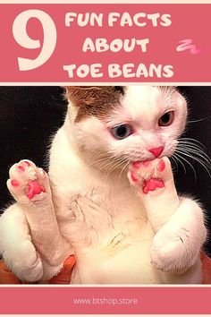 Toe beans, those adorable squishy paw pads which have a similar sense to jelly beans. But turns out, toe beans don't exist just for cat owners, they're an extremely important part of your cat's survival. Fun Facts About Cats, Cat Facts, Interesting Facts About Yourself, Toe Beans, Jelly Beans, Some Fun, Survival, Cute, Red Dates