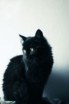black cat. gotta have one