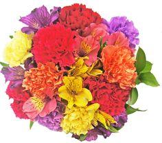 Rainbow Carnation and Alstroemeria