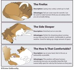 Vey accurate descriptions of Sheltie sleeping positions.
