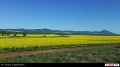 Canola near Riebeek Kasteel Pastorale, St Helena, We Fall In Love, Our Country, Us Travel, West Coast, South Africa, Cape, African