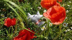 Mirtusz : Pipacsmezőben Mirtuszcica pipacsmezőben textilcica, cicafigura Plants, Plant, Planting, Planets