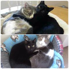 top photo taken from cuteanimalsonline.com, my cats are the bottom photo :) they're dopplegangers! And theyre not in it in this photo but they have the same bed thats in the top photo!