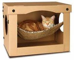 Om te beginnen moet het dier zijn zelfvertrouwen weer terug zien te vinden. Een truuk die voor veel katten werkt, omdat ze nu eenmaal zo nieuwsgierig zijn, is een doos. Liefst meerdere dozen door het huis plaatsen. Aan één kant is de doos open zodat de kat makkelijk in en uit kan en
