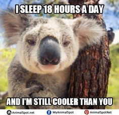 Koala Bear Meme - Koala Funny - Funny Koala meme - - Koala Bear Meme Koala Funny Koala Bear Meme The post Koala Bear Meme appeared first on Gag Dad. The post Koala Bear Meme appeared first on Gag Dad. Koala Meme, Bear Meme, Funny Koala, Funny Animal Memes, Funny Animals, Cute Animals, Funny Memes, Teddy Bear Cartoon, Koalas
