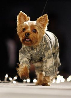 cute small dog breed military canine shirt