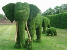 Fabulous topiary of elephants