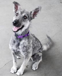 Nilah-  Nilah - a special girl in need of a special home. She's energetic and loves exercise but would require a calm environment to help her manage stress. Looking for a BFF to share your days and nights?