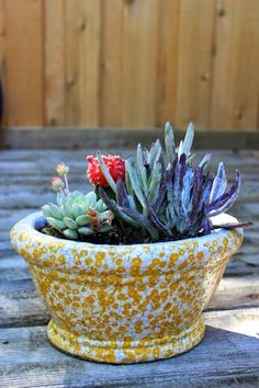 so pretty, and the planter is adorable. / Poppytalk: How to Repot and Care for a Succulent