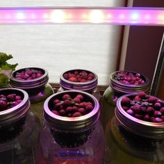 Ball jars and Happy Leaf LEDs make awesome partners. #happyleaf #growlights #hydroponics #indoorgardening #plantnursery #organicgardening #horticulture #LEDs