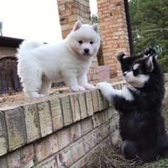 """306.1k Likes, 5,902 Comments - Puppies 