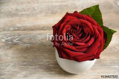 "Download the royalty-free photo ""Red rose close up on wooden table with copy space. Valentine's day or celebration background"" created by stillforstyle at the lowest price on Fotolia.com. Browse our cheap image bank online to find the perfect stock photo for your marketing projects!"