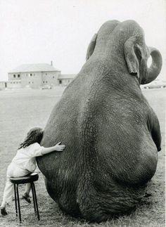 A Girl Anf An Elephant #kids, #elephants, #pinsland, https://apps.facebook.com/yangutu/