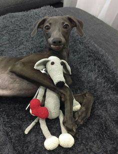 Cuteness alert!! Zemira and her doggie doll. Love her sweet smile. - Tap the pin for the most adorable pawtastic fur baby apparel! You'll love the dog clothes and cat clothes! ♥ Italian Greyhound