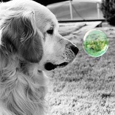 Splash Bubble