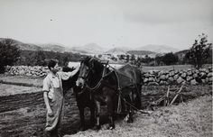 Pløying med hesteplog, fjellet i midten sannsynligvis Smørpigen @ DigitaltMuseum.no Horses, Animals, Animales, Animaux, Animal, Animais, Horse
