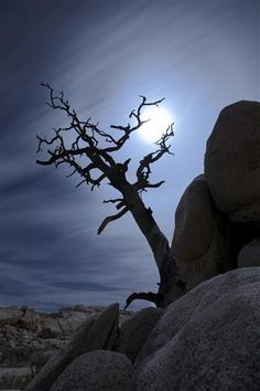 """Talk about Halloween. """"Tree holding Moon"""" by Heidger Marx http://www.ugallery.com/photography-tree-holding-moon#"""