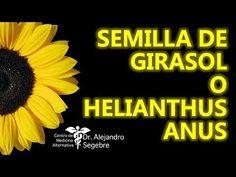 SEMILLA DE GIRASOL O HELIANTHUS ANUS