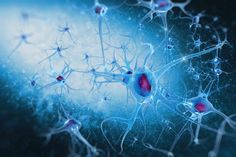 Researchers have successfully activated feelings from lost memories among mice genetically engineered to have early-onset Alzheimer's disease by using a light stimulation therapy developed in 2012.
