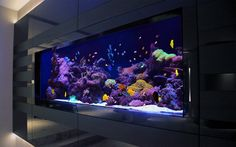 Making Your Home Environment Better with Help From An Aquarium Wall Aquarium, Home Aquarium, Aquarium Design, Marine Aquarium, Reef Aquarium, Aquarium Fish Tank, Cool Fish Tanks, Saltwater Fish Tanks, Saltwater Aquarium