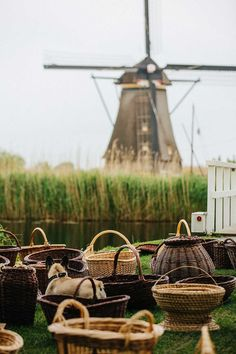 Considering the best day trip from Amsterdam? Why not sample dutch cheese, see dutch windmills at Kinderdijk, visit the Hague or see tulips at Keukenhof.