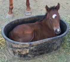 Bath Horse colt #horse#colt#bath
