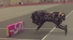 Pesquisadores do MIT criam primeiro robô de quatro patas que consegue pular um obstáculo!