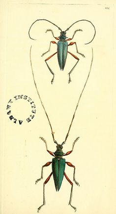 The zoological miscellany :. London :Printed by B. McMillan for E. Nodder & Son and sold by all booksellers,1814-1817..