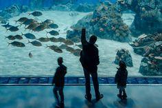 What to do on a Dreary Day in Copenhagen? 3. Den Bla Planet Aquarium Copenhagen | Scandinavia Standard