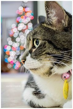 Cat's Noel For more Christmas cats, visit https://www.facebook.com/funholidaycats