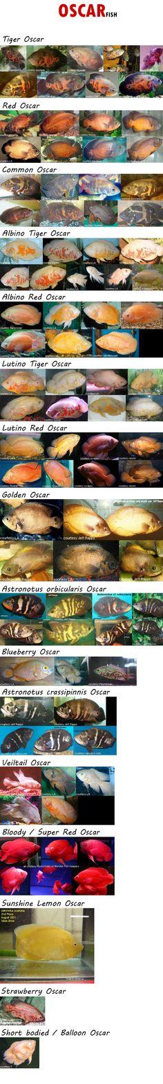 Oscar Varieties