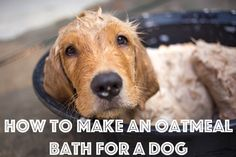 Oatmeal baths are great for when your dog is itchy