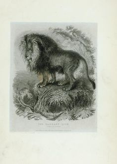 One of hundreds of thousands of free digital items from The New York Public Library. Boy Wall Art, Cnc Woodworking, Drawing Things, Lion Art, New York Public Library, Collections, Digital, Drawings, Prints