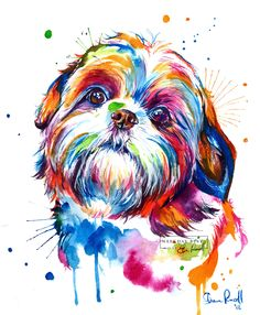 Colorful Shih Tzu Watercolor Print Art Print Of My Original - The Beautiful Shih Tzu Splashed In Colorful Watercolors These Sweet And Lovable Pups Bring Light To Your Life And This Painting Will Brighten Your Walls And Remind You Of Them Everyday Watermar Perro Shih Tzu, Shih Tzu Hund, Shih Tzu Puppy, Shih Tzus, Cross Paintings, Dog Paintings, Painting Prints, Original Paintings, Art Prints