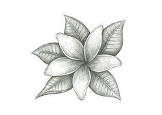 Jasmine Flower - maybe add color Tattoo Son, Back Tattoo, Best Friend Tattoos, Sister Tattoos, Burt's Bees Packaging, Packaging Design, Shoulder Piece Tattoo, Jasmin Tattoo, Jasmine Flower Tattoos