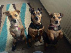 Benji, Millie and Rosie