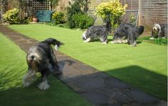 Lawns, Grass, Pets, Animals, Animais, Animales, Animaux, Grasses, Animal