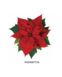 Game - Flower Bingo | free printable Bingo cards for seniors Free Printable Bingo Cards, Free Printables, Nigella Christmas, Garden Games, Poinsettia Flower, Crafts For Seniors, Bingo Games, Christmas Drinks, Party Supplies