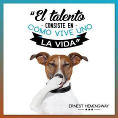 """""""El talento consiste en cómo vive uno la vida"""" #ErnestHemingway #Citas #Frases @Candidman"""