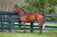 Big Brown, winner of the 2008 Kentucky Derby and Preakness, and sire of 2015 Kentucky Derby contender Dortmund, has been offered for a free breeding to a NY claiming mare.