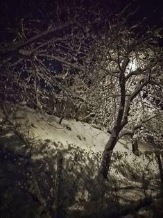 Vteřina v lednu  A den je tichý, křehký jako skořápka. Uvnitř je slunce, také celé bílé. I sníh je bílý, stromy, střechy, sníh. I tato vteřina, i tato bílá chvíle. (Skácel) Photos, Outdoor, Outdoors, Pictures, Outdoor Games, The Great Outdoors