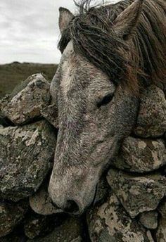 A creature born of ancient stone. All The Pretty Horses, Beautiful Horses, Animals Beautiful, Beautiful Gorgeous, Cute Horses, Horse Love, Horse Photos, Horse Pictures, Zebras