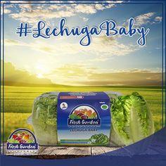 #SabíasQue… La #lechugababy es una variedad más de lechuga, que culltivamos en Fresh Garden, sus hojas pequeñas hacen fácil su manipulación y por supuesto logra un sabor diferenciado en las ensaladas. ¿Ya la conoces?
