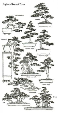 A comprehensive guide to anyone who have a interest in wanting to create miniature trees or just learn the science of dwarfing trees.