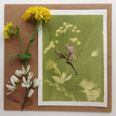 #sunprint with green #solarfast paint on a #watercolour #postcard for a friend's birthday. With a #pressedflower on top of it. Day 4 of #100daysofbotanicalcollages #the100dayproject